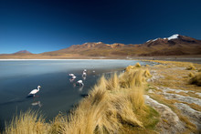 Laguna Canapa With Flamingo, B...