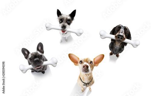 Poster Crazy dog dog with big bone