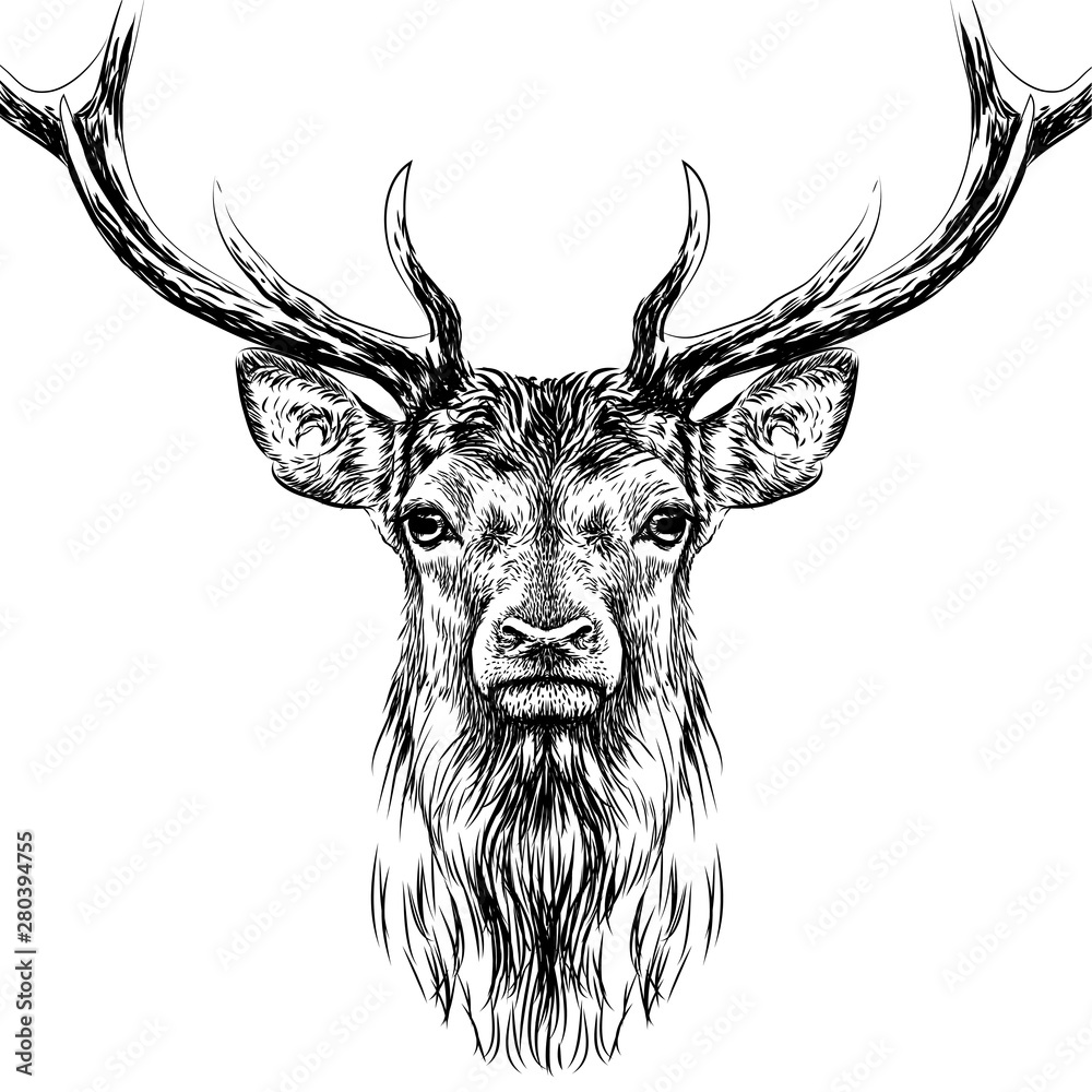 Fototapeta  Deer. Sketchy, black and white, hand-drawn portrait of a deer's head on a white background.