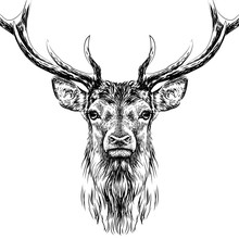 Deer. Sketchy, Black And Whit...