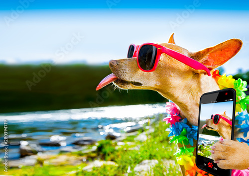 Poster Crazy dog beach summer vacation dog selfie