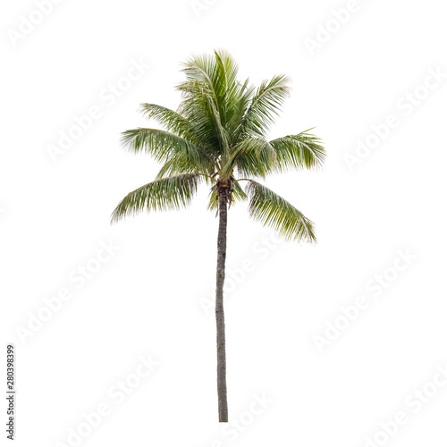 Deurstickers Palm boom Photo of isolated coconut palm tree