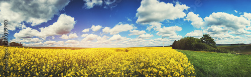Poster de jardin Fleur Panoramic summer landscape with rapeseed field