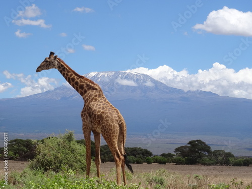 Photo  Kilimandjaro and giraffe