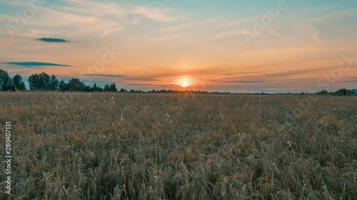 Fotomurales - Beautiful scenic sunset with rays of sun shining through clouds in sky 4K UHD Timelapse. Yellow sunset over the field of wheat. Sun sets over horizon closeup. Beauty of nature, agriculture, harvest