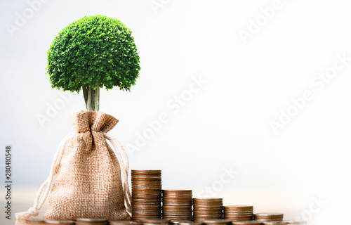 Obraz Coins in sack and small plant tree. Pension fund, 401K, Passive income. savings and making money. Investment and retirement. Business investment growth concept. Risk management. - fototapety do salonu