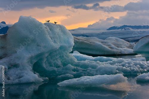 Charrán ártico, Laguna Jókulsárlón, Glaciar Vatnajökull, Islandia