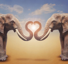 A Pair Of Elephants Arrange Tr...