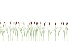 Thin Reed Stalks Plant Seamless Pattern On White Background