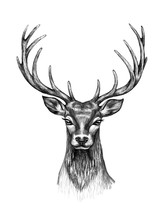 Deer Head  With Horns Pencil D...