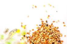 Mixed Bird Seeds, Millet Pile Isolated On White Background
