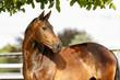 canvas print picture - Pferdeportrait auf der Weide