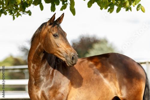 Fotografía Pferdeportrait auf der Weide