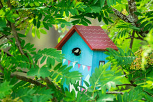 Bird Feeding His Chicks In A Birdhouse