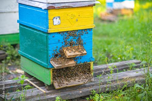 Papel de parede From beehive entrancebees creep out