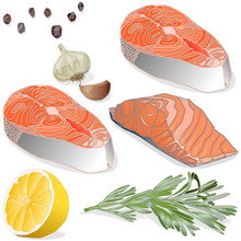 Raw Salmon Fillets With Herbs On White Background. Vector Illustration