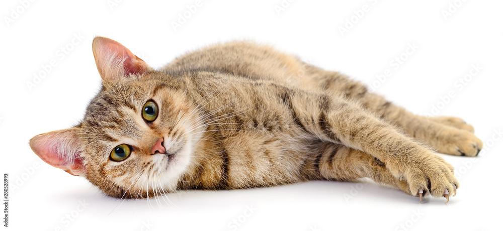 Fototapeta Small brown kitten.