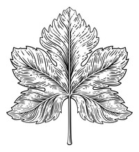 A Grape Leaf Design Element In...