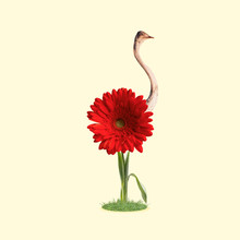 Self Growned. An Ostrich As Bright Red Flower, Growning On The Ground On Yellow Background. Negative Space To Insert Your Text. Modern Design. Contemporary Art. Creative Conceptual And Colorful