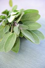 Close Up On Sage Leaves