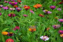 Beautiful Butterfly On A Flower In A Large Multi-colored Flower Bed