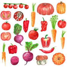 Different Red, Orange, Purple Vegetables Clipart Set, Pumpkin, Carrot, Tomato, Beetroot, Pepper, Hand Drawn Watercolor Illustration Isolated On White. Halloween Symbol