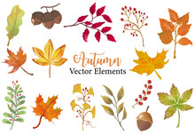 Autumn Object Collection With Dry Tree,flower,acorn,leaves.Illustration For Sticker,postcard,invitation,element Website