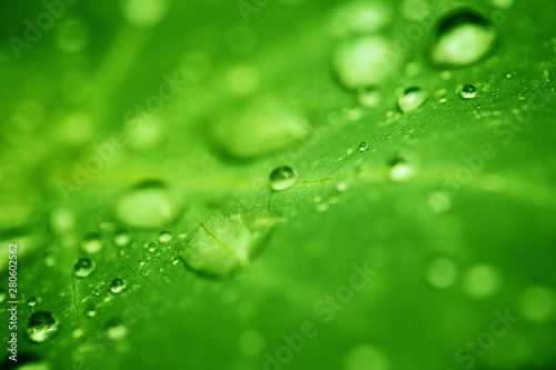 Drops of transparent rain water on a green leaf close up. Beautiful nature background. - 280602562