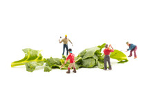 People Working With Food, Miniature People Harvesting Spinach/Green Leaves, Construction Site