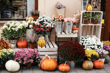 Pumpkins,squash And Flowers On Rustic Wooden Boxes In City Street, Holiday Decorations Store Fronts And Buildings. Halloween Street Decor. Space For Text. Trick Or Treat. Happy Halloween