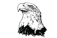 Vector Bird. Eagle Illustration. Good For Logos And Posters.
