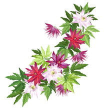 Red And Pink Clematis Flowers, Vector Illustration Isolated On White Background, Imitation Of Watercolor Painting.