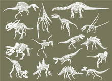 Color Set Of White Dinosaur Sk...