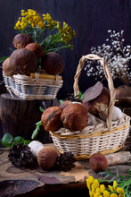 Forest Mushrooms In Wicker Bas...