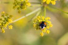 Summer Flowers And Ladybug