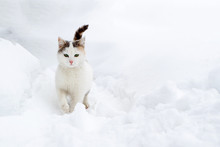 Dirty Homeless Cat In The Snow Moving Through The Snow