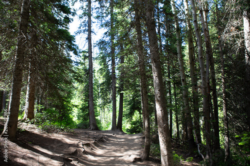 trees in forest hiking green organic nature peace life summer green relax and explore
