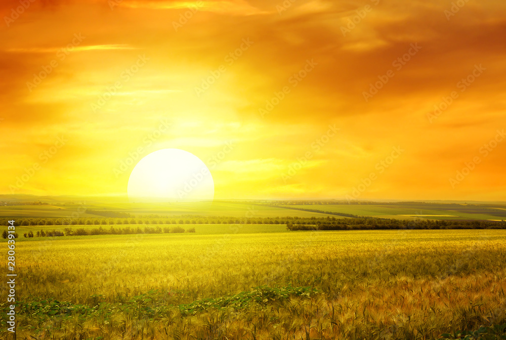 Fototapety, obrazy: Golden sunset over field