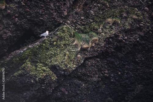 Poster Chamaleon ptak