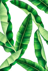 Fototapeta Liście Seamless pattern with banana leaves. Hand drawn watercolor illustration.