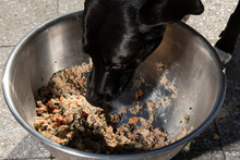 Black Dog Eats A Bowl Of Wet D...