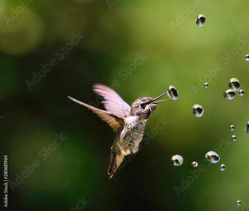 Fotografia Hummingbirds with water drops
