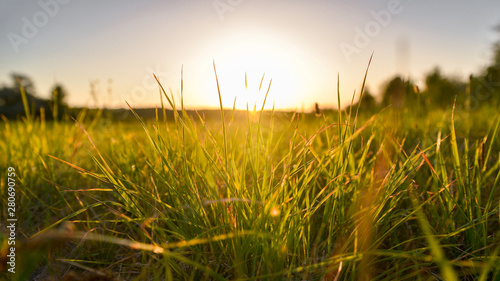 Poster Gras grass and sunset