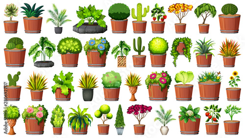 Photo  Collection of potted plants on white