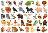 Fototapeta Fototapety na ścianę do pokoju dziecięcego - Diverse set of isolated animals on white