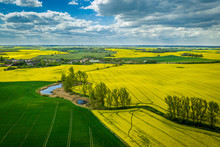 Flying Above Yellow Rape Fields In Spring, Poland