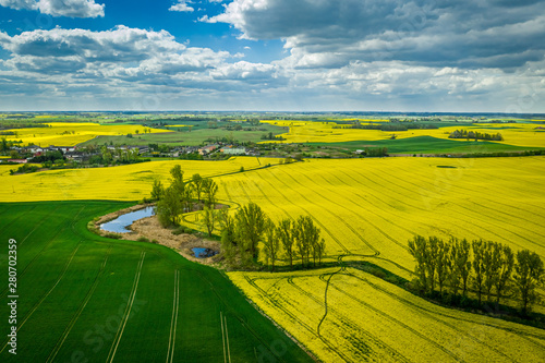 Obraz Flying above yellow rape fields in spring, Poland - fototapety do salonu