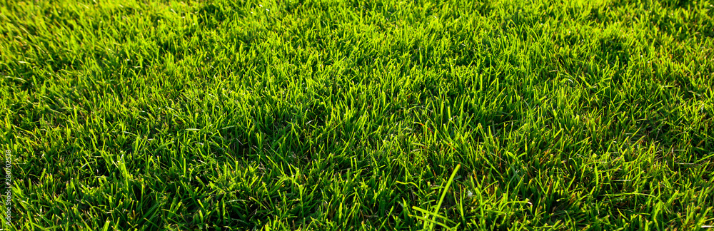Fototapety, obrazy: Green grass on the ground as a background