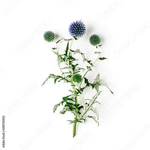 Obraz na płótnie Blue thistle flowers, echinops branch