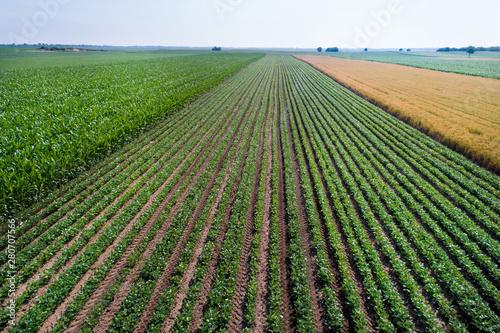 Foto Top view of soybean field
